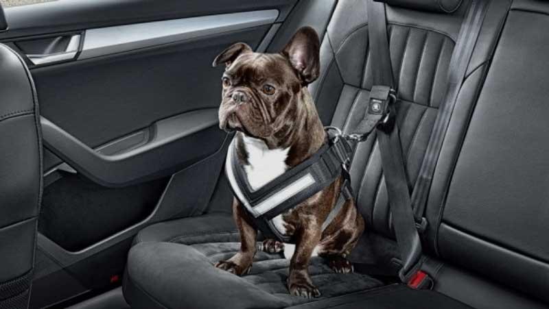 cinture di sicurezza per cani